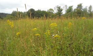 A meadow at Greensprings