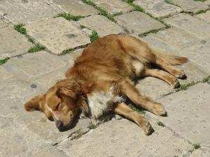 Matteo, a Ragusa resident